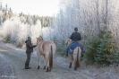 Het Fjordenpaard