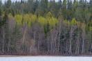 Byn, lente aan het meer