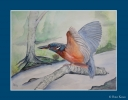 Aquarel IJsvogel